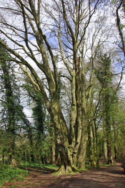 old - tree